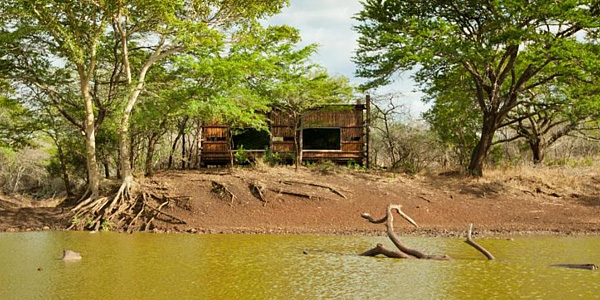 Wildlife Waterhole Hide Leopard Mountain Game Lodge Manyoni Private Game Reserve Zululand Rhino Reserve Big 5 Hluhluwe iMfolozi Reservations
